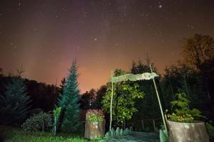 Nocne niebo nad ogrodem